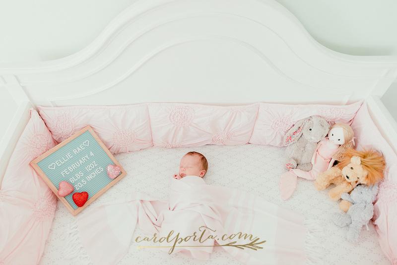 carol porta photography multi generation extended family newborn south florida plantation photographer